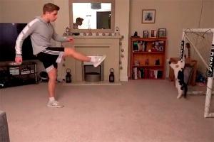 Видео с котом-вратарём оказалось фейком. Блогер рассказал, как снял его