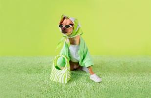 Собака-блогер запустила свой бренд одежды. А ты нет